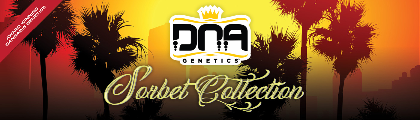 Sorbet Collection By DNA Genetics