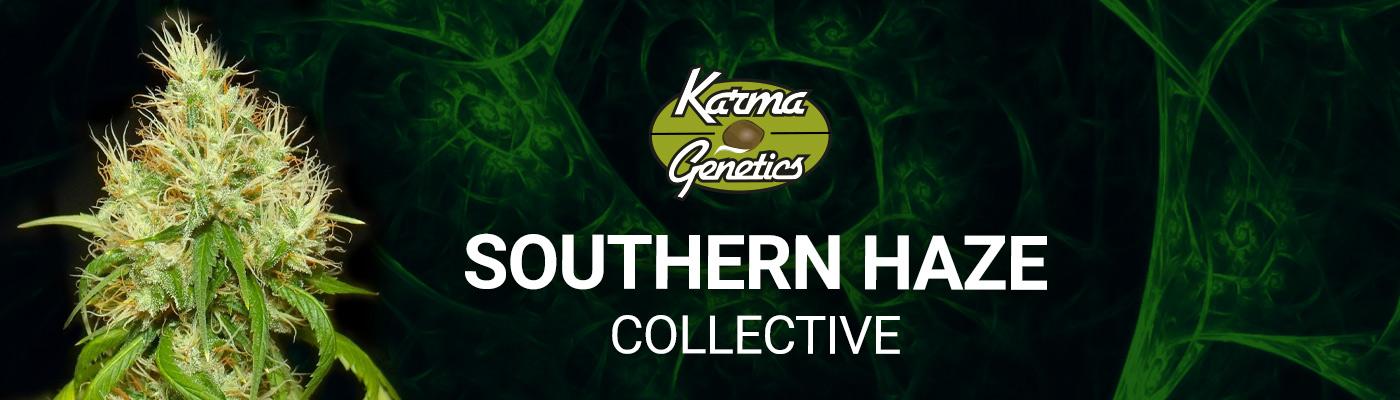Southern Haze Collective