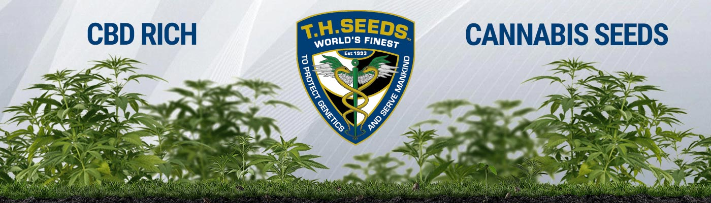 TH Seeds - CBD Cannabis Seeds