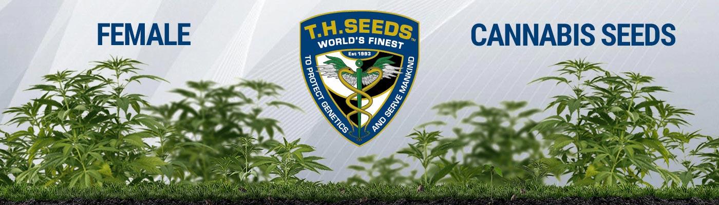 TH Seeds - Female Cannabis Seeds