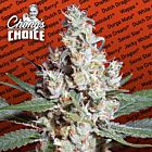 L.A. Amnesia (Sativa) Female Cannabis Seeds by Chong's Choice