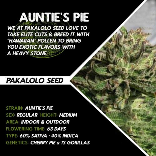 Auntie's Pie By Pakalolo Seed Cannabis Seedbank