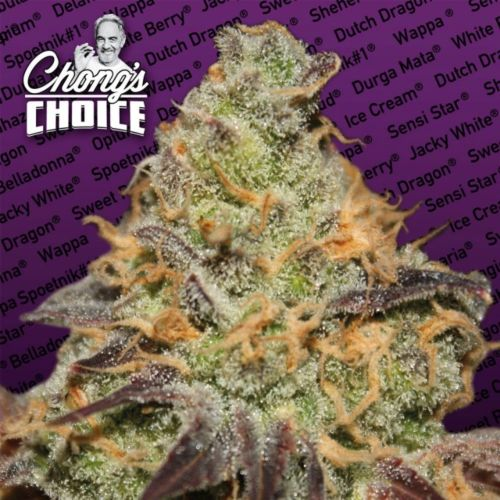 Blue Kush Berry (Indica) Female Cannabis Seeds by Chong's Choice
