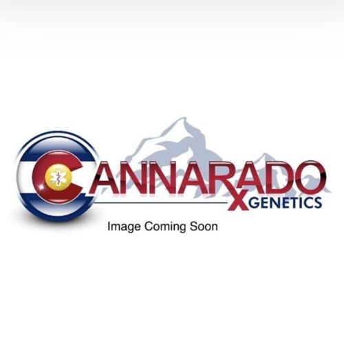 Sasha Female Cannabis Seeds by Cannarado Genetics