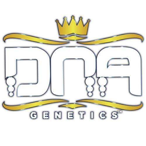 Sour Kosher Female Cannabis Seeds by DNA Genetics