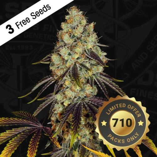 French Cookies Female Cannabis Seeds by T.H.Seeds