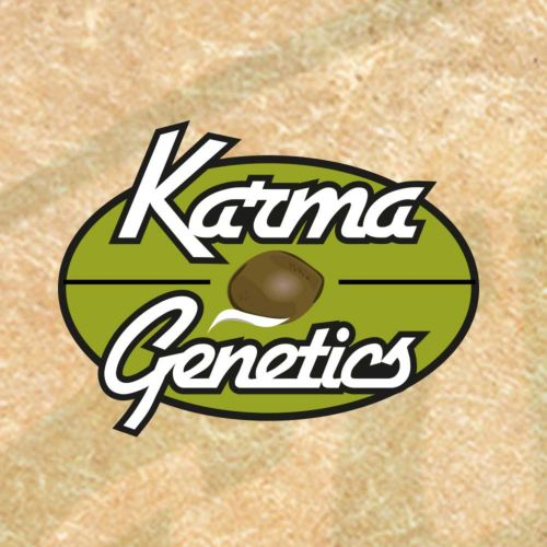 Mochiesel Regular Cannabis Seeds by Karma Genetics
