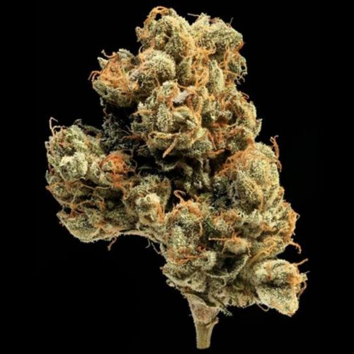 Lemon Apricot Regular Cannabis Seeds By Compound Genetics