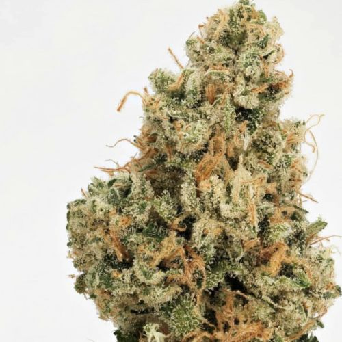 4 Kings Regular Cannabis Seeds by Massive Creations