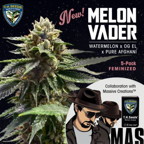 Melon Vader Female Cannabis Seeds by T.H.Seeds