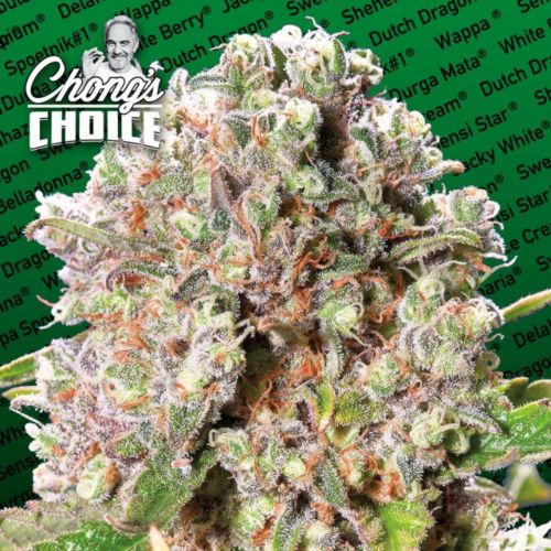 Mendocino Skunk (Hybrid) Female Cannabis Seeds by Chong's Choice