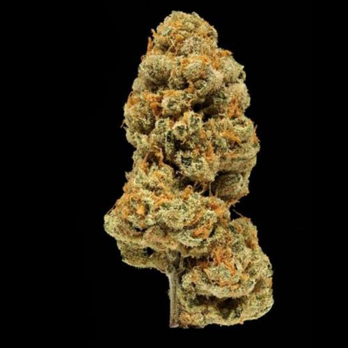 Orange Apricot Bx1 Regular Cannabis Seeds By Compound Genetics