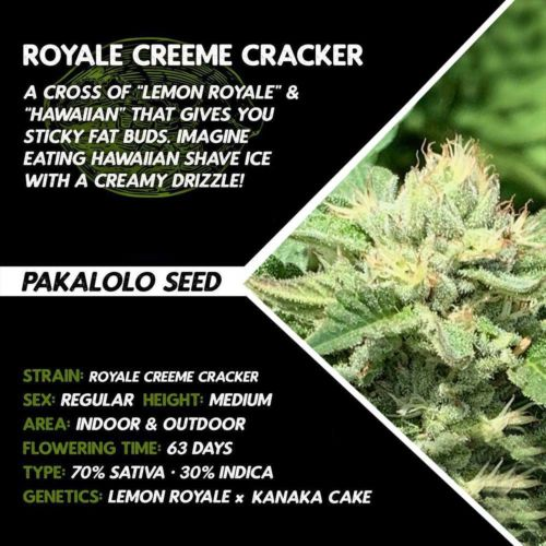 Royale Creeme Cracker by Pakalolo Seed Cannabis Seedbank