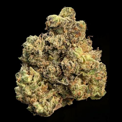Strawberry Apricot Regular Cannabis Seeds By Compound Genetics