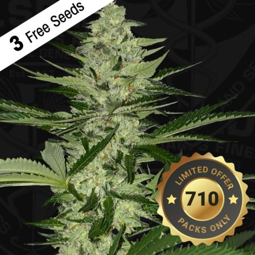 MelonSicle Feminized Cannabis Seeds by T.H.Seeds (Bastards Line)