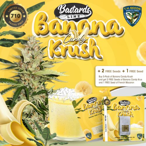 Banana Candy Krush Feminized Cannabis Seeds by T.H Seeds