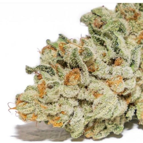 Thor's Hammer Regular Cannabis Seeds by Massive Creations