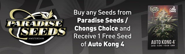 Buy any Seeds from Paradise Seeds / Chongs Choice and Receive 1 Free Seeds of Auto Kong 4
