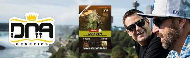 Buy any Female Seeds from DNA Genetics / Reserva Privada / Crockett Family Farms and Receive 2 Free Seeds of OG Kush (Bag Seed from Grateful Dead Show (Chem Dawg))