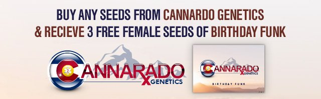 Buy any Seeds from Cannarado Genetics and Receive 3 Free Female Seeds of Birthday Funk